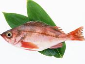 大宮市場の水産物仲卸業