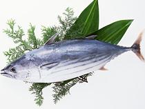 初夏の鮮魚【カツオ】