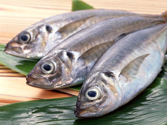 初夏の鮮魚【アジ】