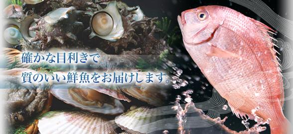 新鮮なお魚をお届けします。株式会社 押尾水産